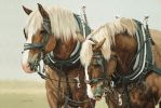 uprząż końska