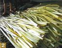 b_150_100_16777215_00_images_male_papirus2.jpg