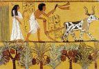 rolnictwo w Egipcie