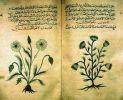 strona z książki o ziołolecznictwie